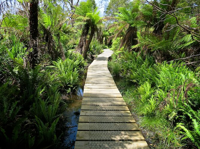 Sealers Swamp Boardwalk
