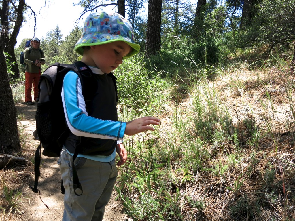 Kid-Hikes-PCT-Mt-Laguna 8